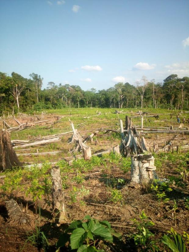 Zonas deforestadas de la comunidad Anak Kurutuyacu donde se ha encontrado madera extraída. Foto: Rondas indígenas del Bajo Huallaga.