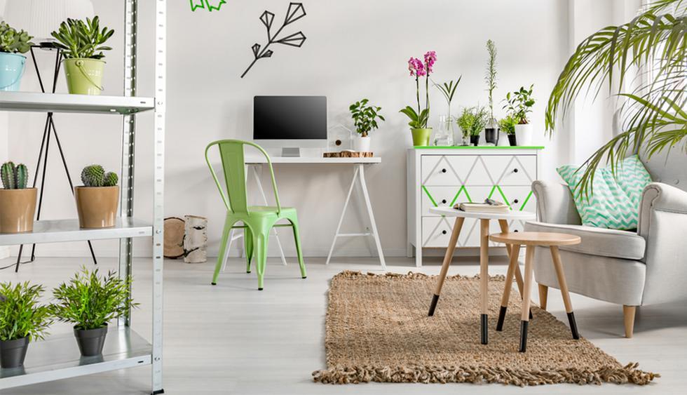 Atrae la buena energía del Feng Shui colocando estas plantas en casa. Conoce cuáles son las que deberías incluir. (Foto: Shutterstock)