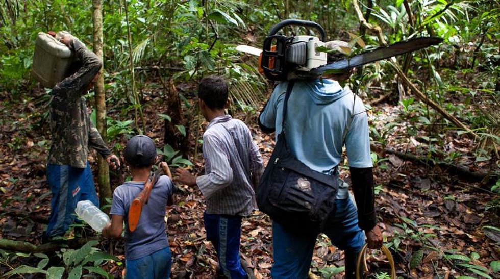 La tala ilegal y su preocupante panorama en la Amazonía [Fotos] - 5