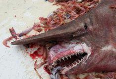 Capturan a un extraño tiburón duende en California