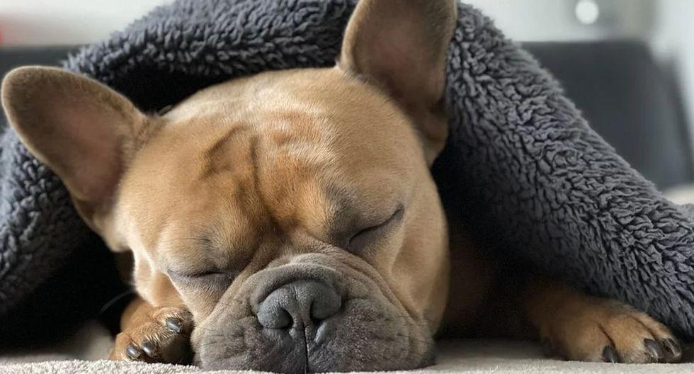Alertan que tratar a un perro como si fuese un hijo más de la familia puede llevar a trastornos psicológicos | Foto: Pixabay / Mylene2401 (Referencial)