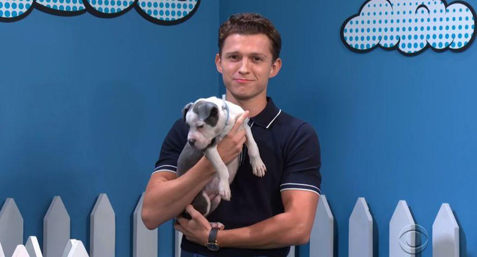 Captain Americuddles, J. Bonea-ah Jameson y Nick Furry son los nombres de algunos de estos cachorros. (Foto: CBS)