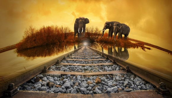 Casi 70 elefantes han muerto atropellados por trenes entre 2013 y junio de 2019, sobre todo en el estado de Assam, en el noreste, y en Bengala Occidental, en el norte de India. (Foto: Pixabay/Referencial)