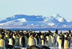 Antártida: cinco cosas que debes saber sobre la fauna del continente blanco