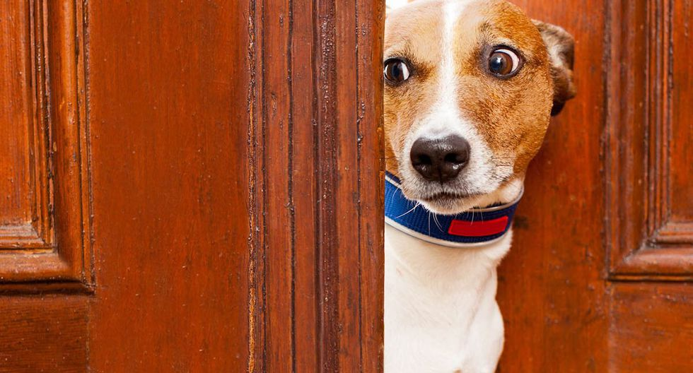 La historia del cachorro que sufrió daño cerebral por causa de los fuegos artificiales. | Foto: Referencial/Pixabay