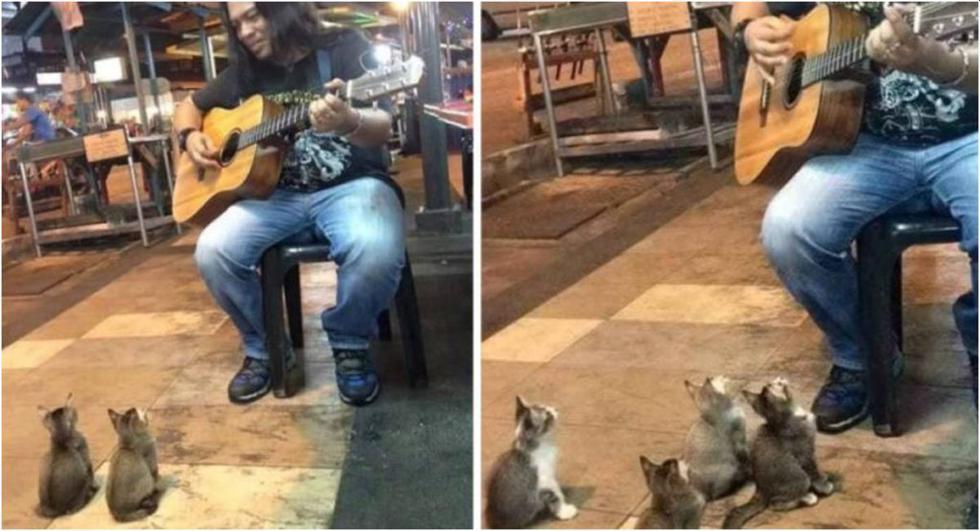 Artista callejero consigue a 4 gatos para ser sus espectadores. (Foto: Captura YouTube)