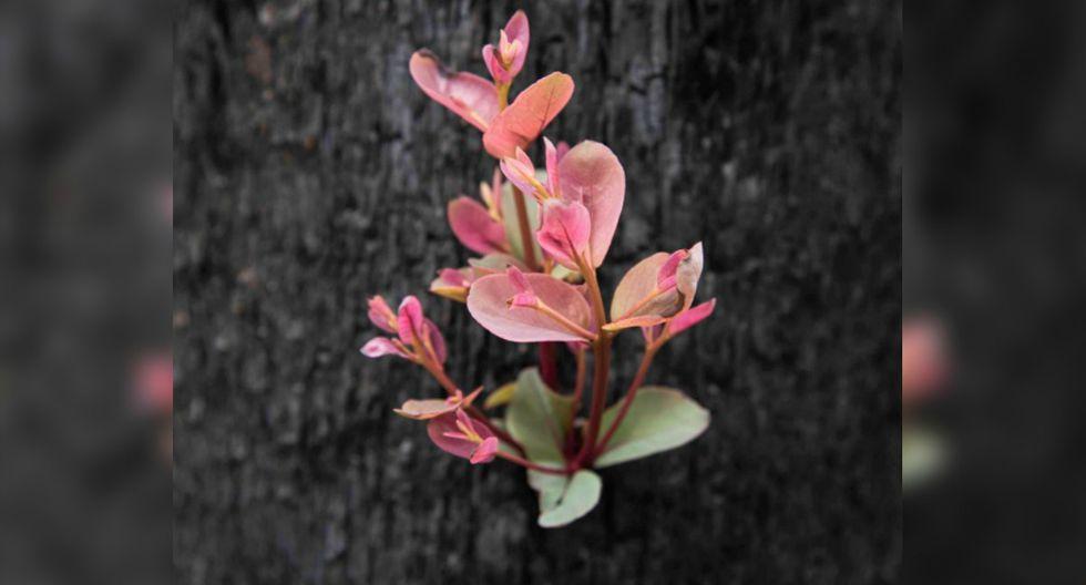 La fotógrafa Mary Voorwinde mostró cómo se recupera la flora en la ciudad de Kulnura, en Nuevo Gales del Sur, tras los devastadores incendios. (Foto: Facebook/Photography By Mary)