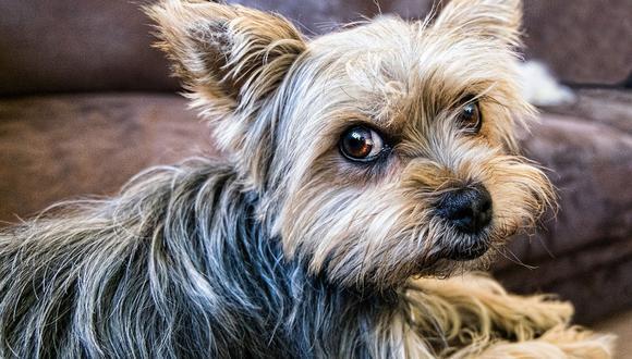 El can tuvo una actitud muy adorable para los usuarios del portal de YouTube. (Pixabay)