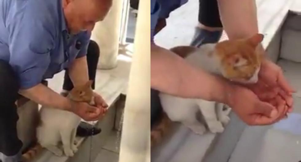 Un anciano conquistó Facebook por ayudar a un sediento gato a beber agua. (Fotos: susanatananda3 en Twitter)