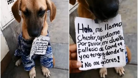 Chester es un perro que fue rescatado y puesto en adopción luego de que su dueña muriera víctima del covid-19. Su historia se viralizó en las redes sociales. (Fotos: Huellitas Felices Perú)