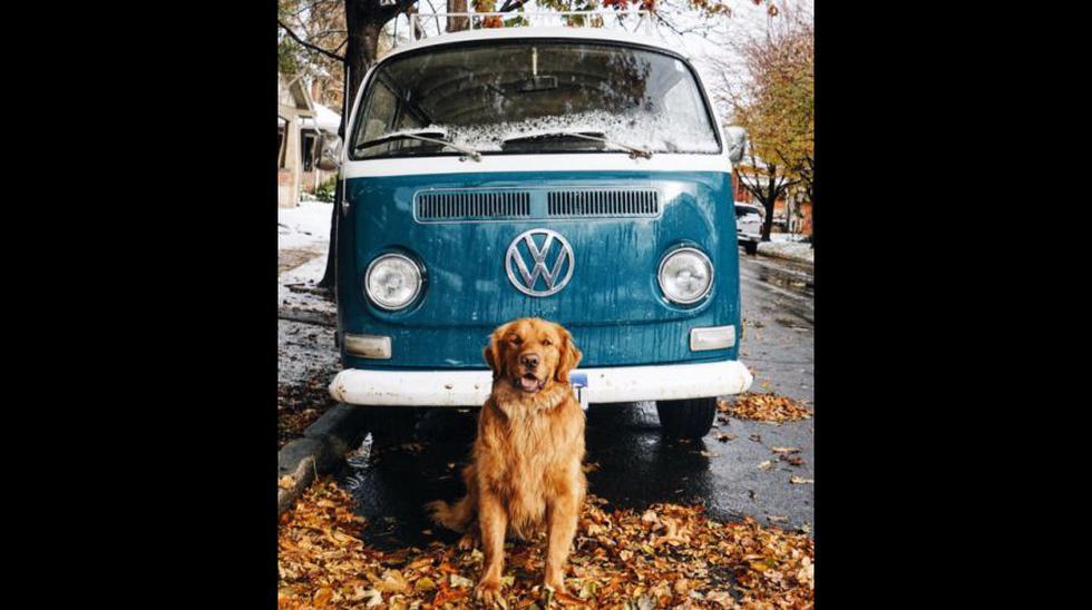 Conoce al perro hipster que causa furor en Instagram - 1