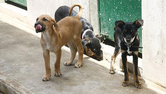 Chorrillos: robacasas matan 3 perros para asaltar de madrugada