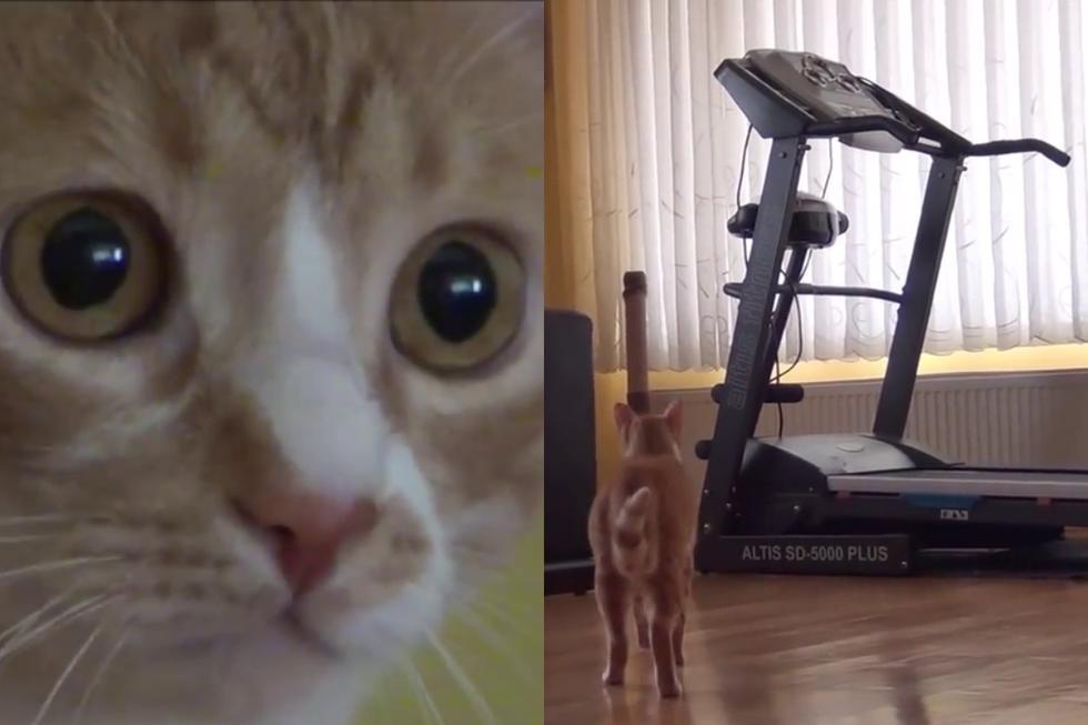 El gato 'Indy' se encontró con una caminadora en medio de la habitación y su reacción se volvió tendencia en las redes sociales. (Fotos: Walter Santi en YouTube)