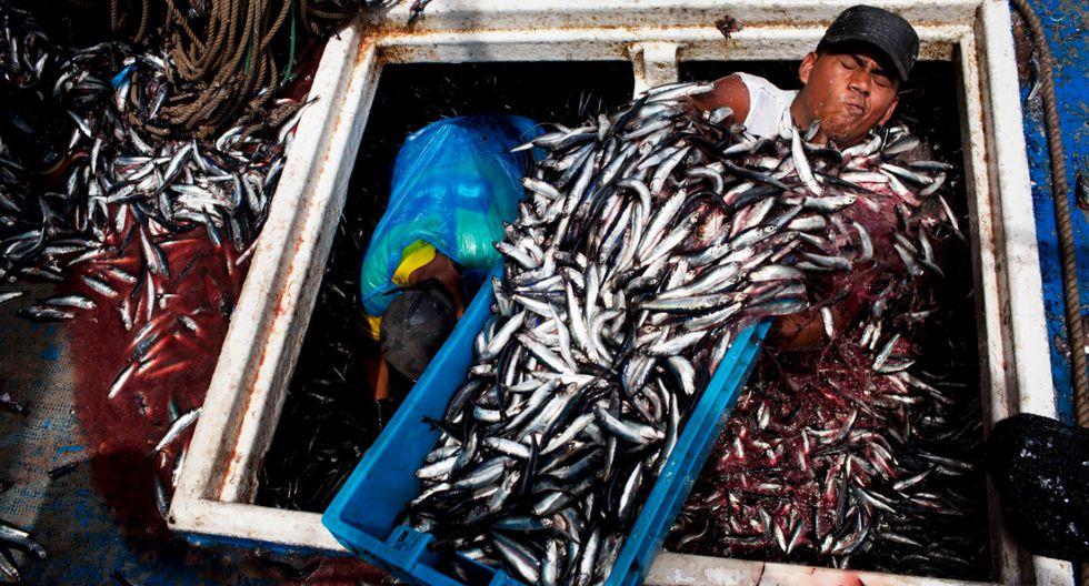 Este año, se capturaría menos de 4,5 mlls. de toneladas de anchoveta. Este es el volumen que requiere la industria para ser rentable, estiman en TASA. (Foto: AFP)