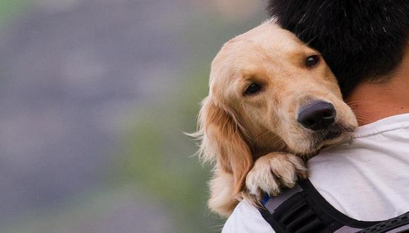 Tratar a tu mascota con amor, respeto y consideración es fundamental para tener un animal equilibrado y seguro de sí mismo.