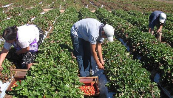 Las compras estatales para la agricultura familiar hasta el 30% será de manera gradual. (Foto: GEC)