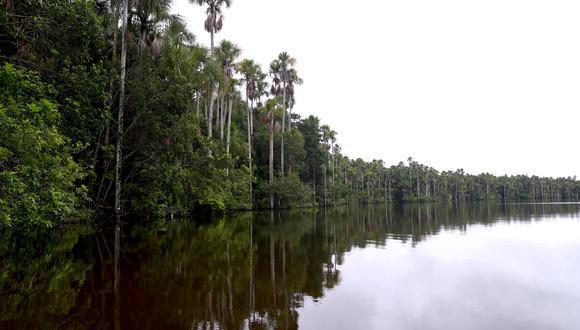 La Reserva Nacional de Tambopata, en Madre de Dios, se extiende sobre 274.690 hectáreas (Foto: Alessandro Currarino).