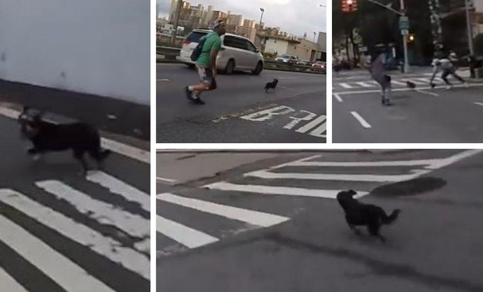 Muchas personas intentaron atrapar a la mascota. (YouTube)