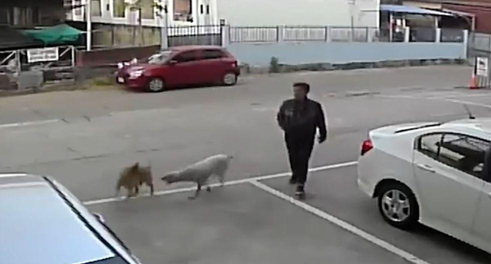 Esta es la curiosa escena que tuvo como protagonista a un desafortunado hombre que fue víctima de dos perros que peleaban entre sí | YouTube / Viral Press