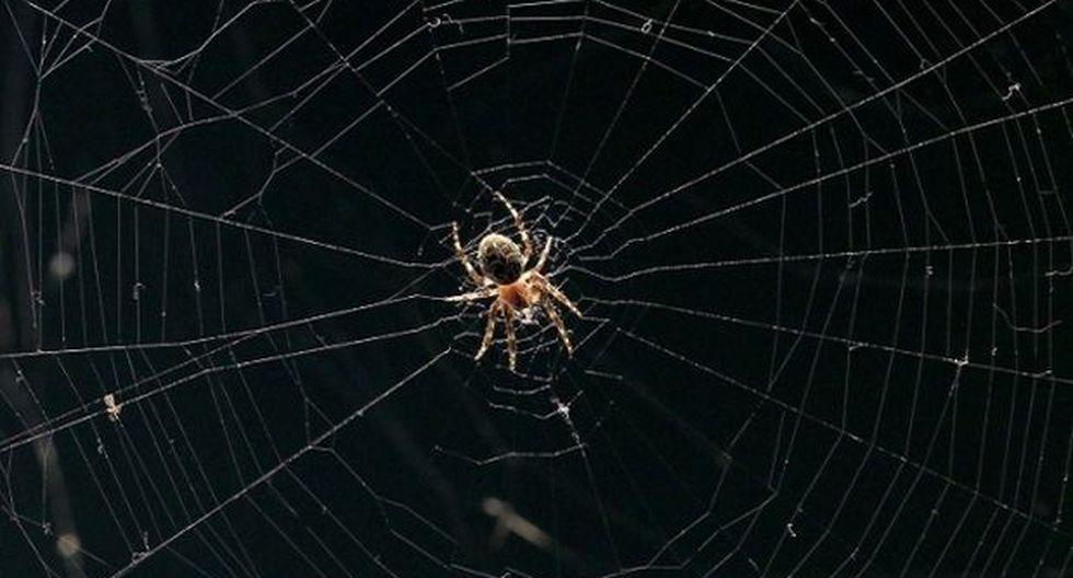 ¿Las arañas tienen súperpoderes?