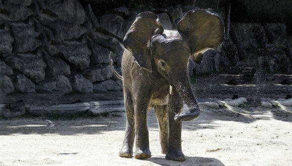 Se viralizó en Facebook la cautivadora escena protagonizada por un elefante y su cuidador. (Foto: Referencial/Piixabay)