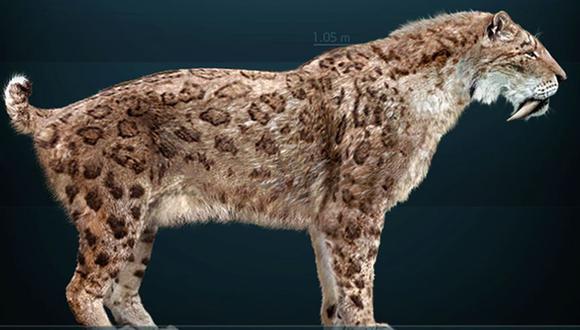 El smilodon pesaba unos 300 kilos y tenía unos prominentes caninos que llegaban a sobresalir hasta 25 centímetros de su boca.(Foto: Wikimedia Commons)