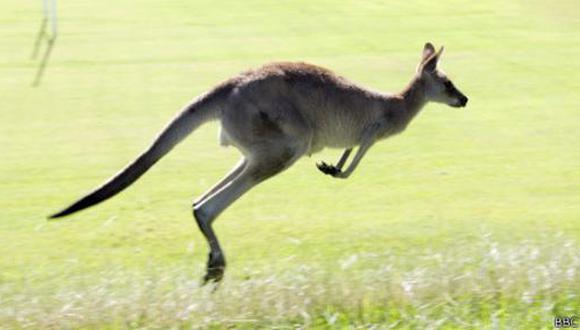 """El canguro es el único animal que camina con """"cinco patas"""" - 1"""