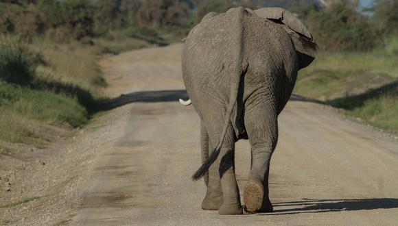 Hombre a bordo de un vehículo tuvo un encuentro cara a cara con un furioso elefante en medio de la carretera. (Foto: Pixabay / referencial)