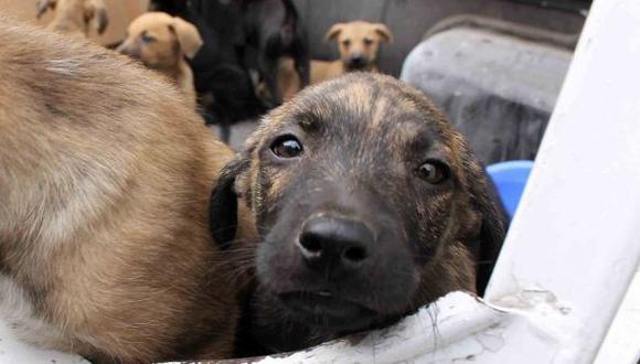 Aprobaron ley que castiga maltrato animal con 5 años de cárcel