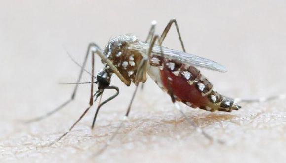 Casos de dengue casi se triplican en solo dos semanas en Piura