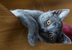 Gato protagonizó un singular video que ha hecho reír a muchos usuarios
