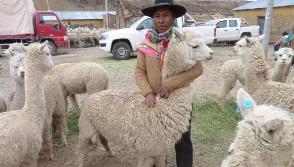 Puno: reponen alpacas a criadores afectados por heladas