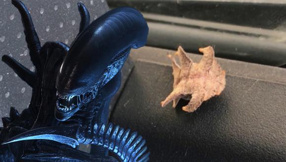 Un conductor quedó asombrado al hallar dentro de su vehículo a un insecto que parecía sacado de la película 'Alien'. (Foto: Pen News en YouTube)