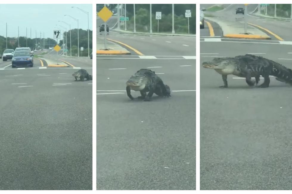 El lagarto atemorizó a una familia en Florida y el hecho fue cubierto por medios noticiosos en Florida. (Capturas: Facebook)