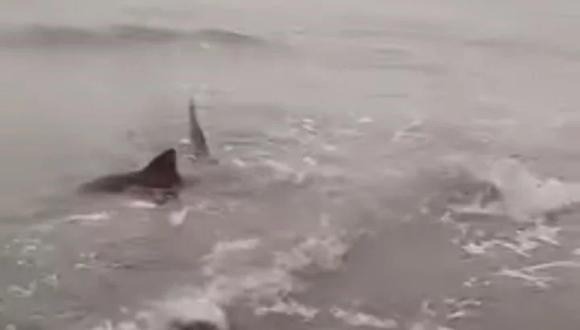 Tiburones en la costa de Buenos Aires causan sorpresa y temor en turistas. Foto: Captura de video