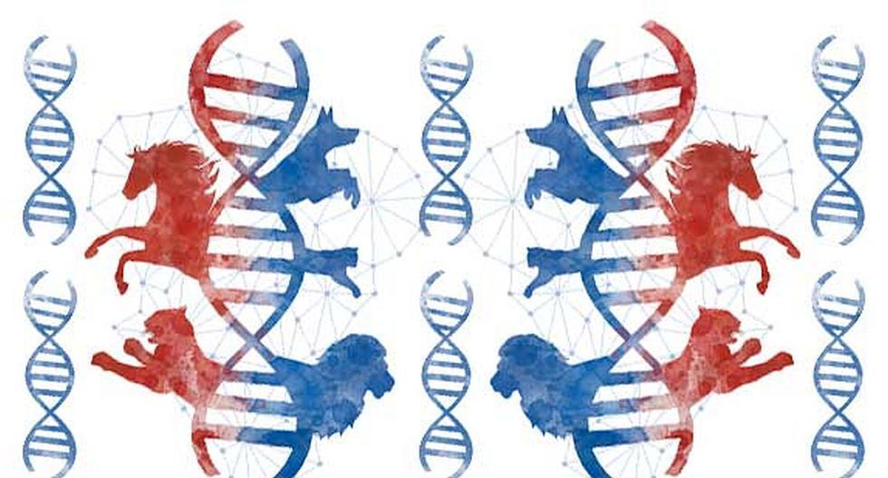 La intervención humana ha desencadenado, en los últimos milenios, significativos cambios en las distintas especies de vertebrados. Tomás Unger nos lo explica esta semana. (Ilustración: Rolando Pinillos)