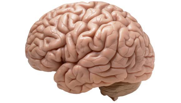El aprendizaje temprano estimularía sobrevivencia de neuronas