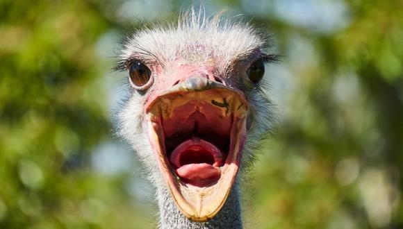 Según la joven que grabó las imágenes, existen muchas posibilidades de encontrarse con avestruces en Punta del Cabo. (Foto referencial - Pexels)