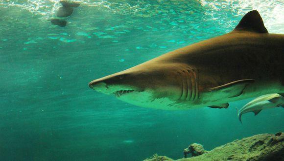 Uno de los pescadores metió su mano debajo del agua y logró grabar de cerca al gigantesco espécimen. (Foto: Referencial/Pixabay)