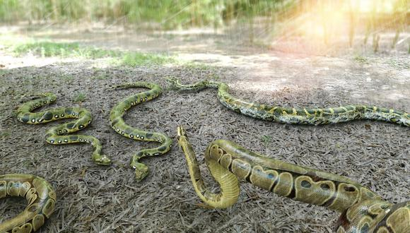 El dueño de un rancho se topó con decenas de serpientes viviendo debajo de una de las construcciones de su propiedad. (Foto: Pixabay/ Referencial)
