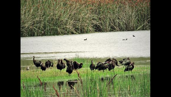 Hasta el momento se han registrado 50 especies de aves, pero los especialistas indican que con una reforestación este número podría llegar a 100 especies.