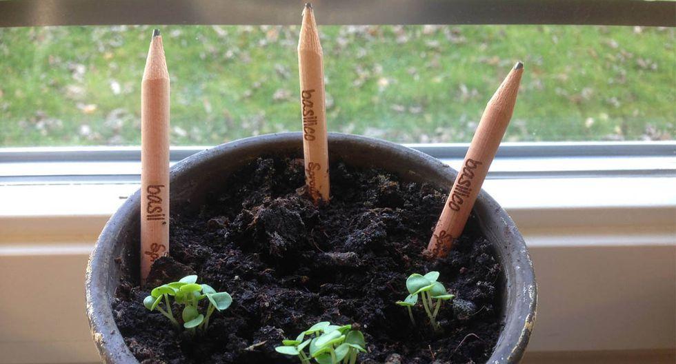 Obtén hermosas plantas al 'sembrar' los lápices Sprout - 1