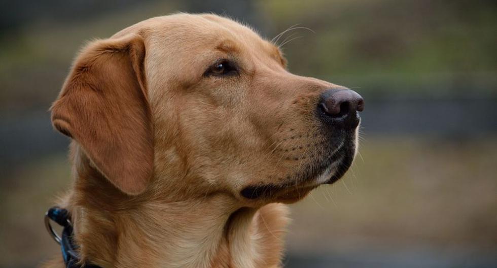 El accionar del can generó diversas reacciones en YouTube. (Pixabay / Pezibear)