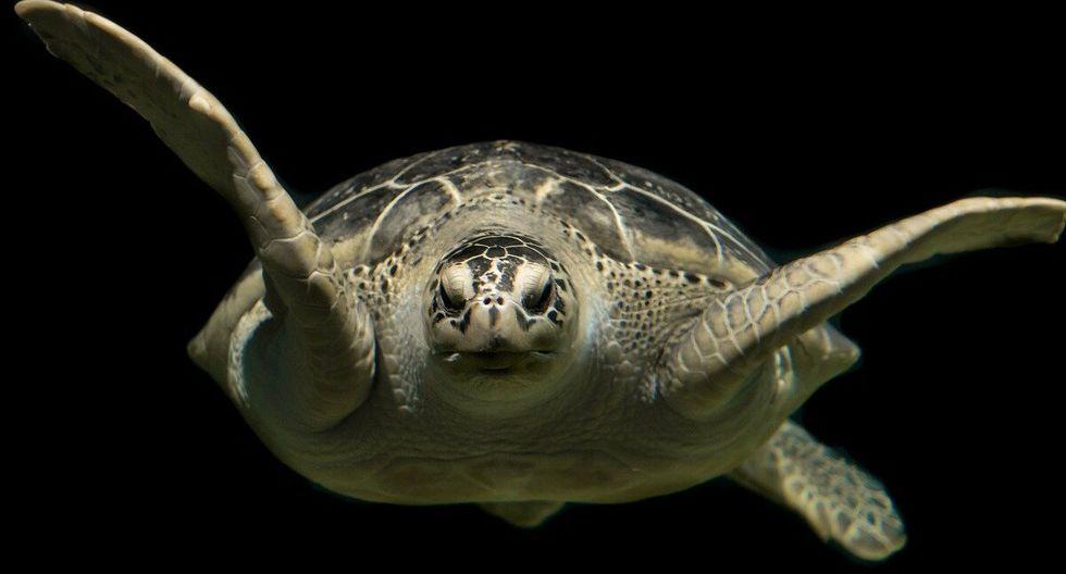 Las tortugas requieren de sol para calentar sus cuerpos. (Foto: Pixabay/ referencial)