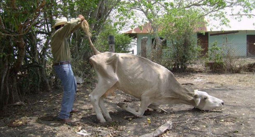 Declaran en emergencia el agro y la ganadería en Olmos - 1