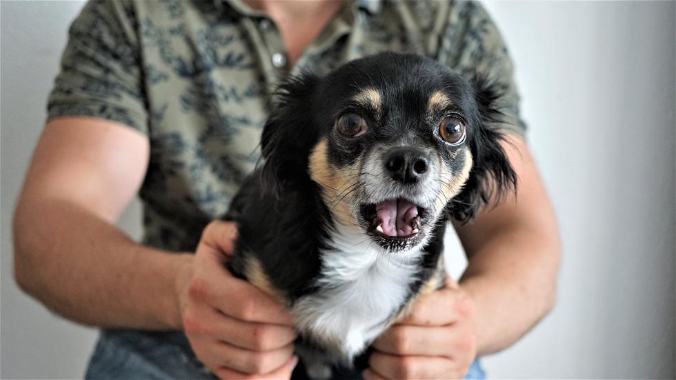 Así es como este cachorro ayudó a su compañero a 'salvarle la vida' resucitándolo con reanimación cardiopulmonar. (Foto: Pixabay)