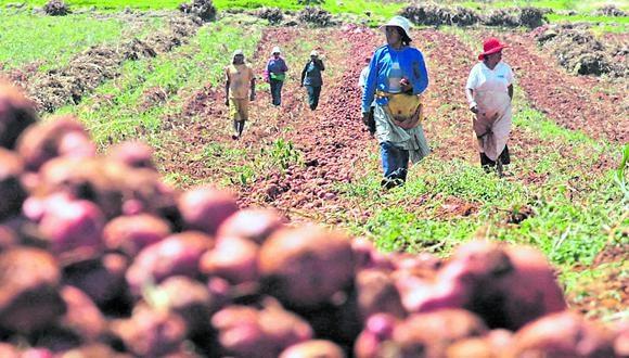 La norma busca beneficiar a la agricultura familiar. (Foto: GEC)