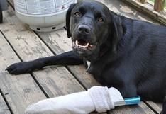 Conoce de cerca cómo salvar la vida de tu mascota
