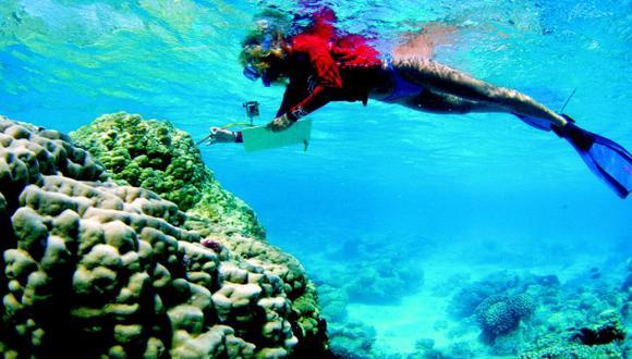 Una proteína de coral australiano bloquea el VIH