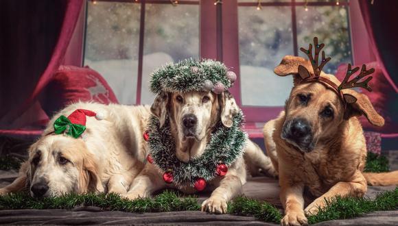 Hay que tener mucho cuidado con las mascotas durante Navidad, en especial con la decoración del hogar para no dañar su salud. (Foto: Sven Lachmann / Pixabay)